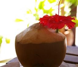 今話題のココナッツ美容方法を手軽に取り入れよう