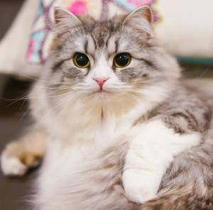 猫背を治して綺麗になろう!